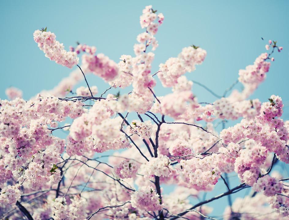 fleurs-oranger